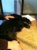 Friskvård hund